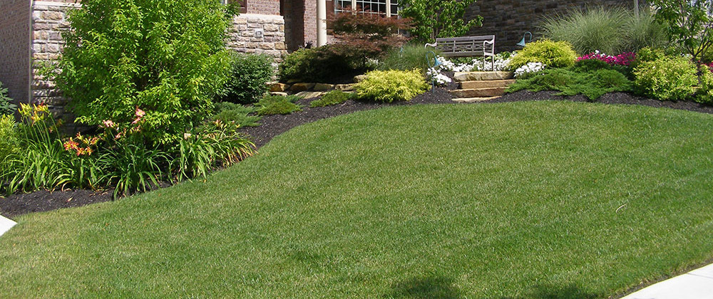 Maintenance Advice. Patching Lawn Spots
