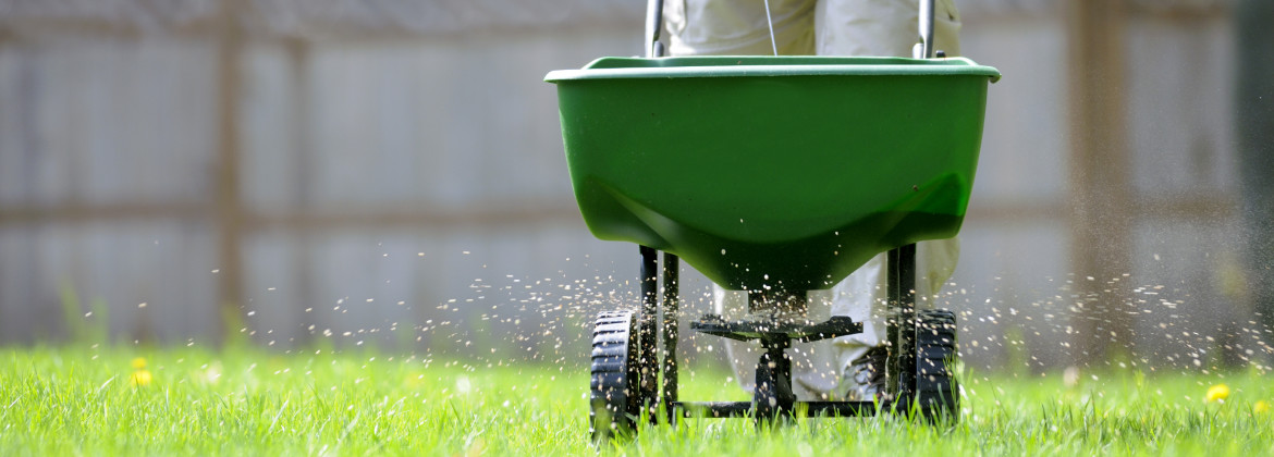 Four Simple Things to Do For Your Yard This Summer